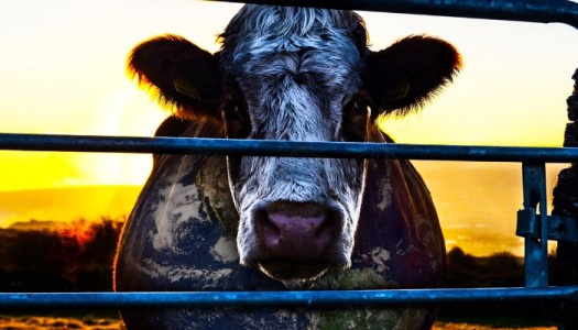 Cowspiracy: O Segredo da Sustentabilidade